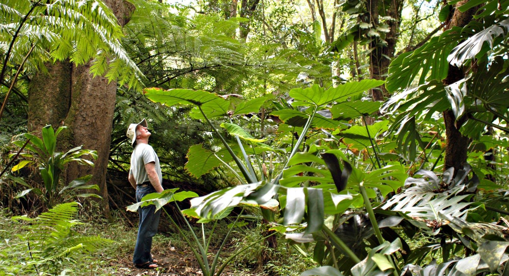 Product Waterfall & Rainforest Hike